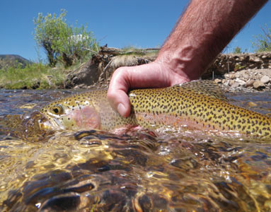 Fishing in colorado for Rio fly fishing