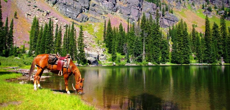 colorado horseback riding south fork